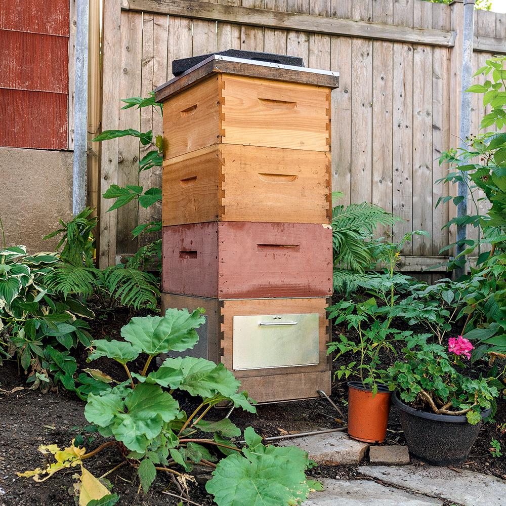 Une ruche à la maison