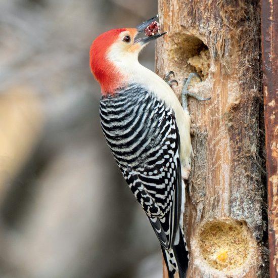 Conditions idéales pour attirer les oiseaux dans votre cour