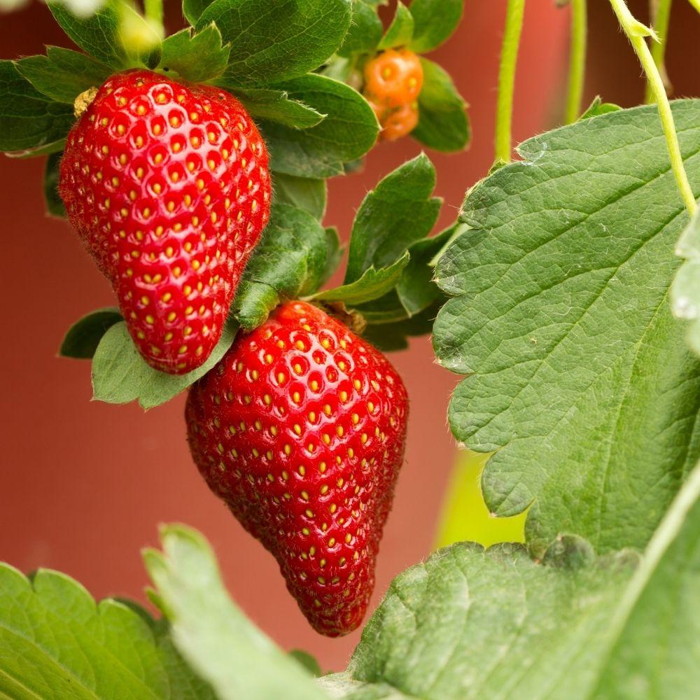 7 plantes à récolter tôt dans la saison