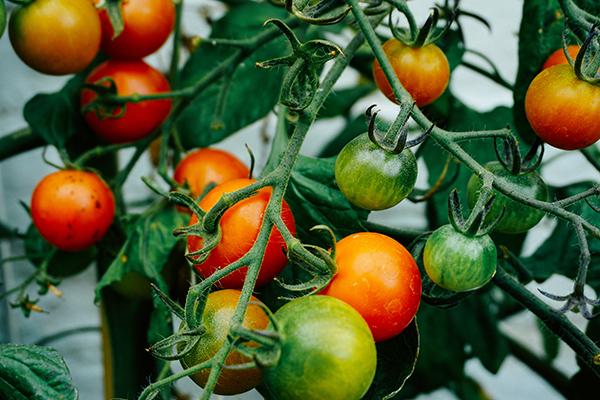 Astuces de jardinage inédites