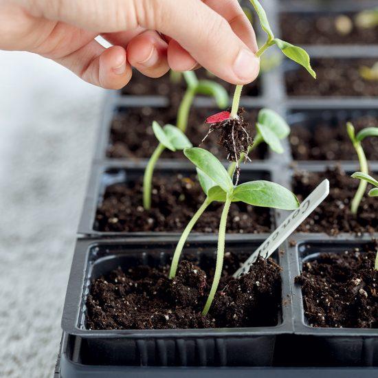 Le suivi des semis