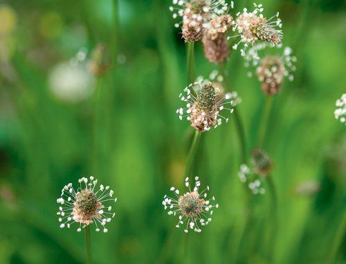 Le saviez-vous? 8 faits étonnants sur les plantes