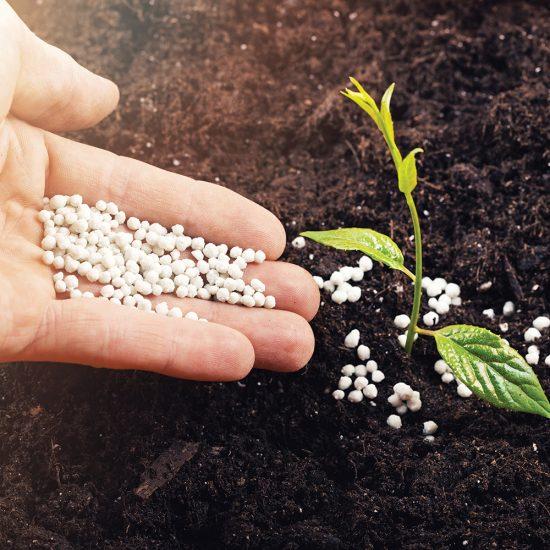 Tout savoir sur les fertilisants