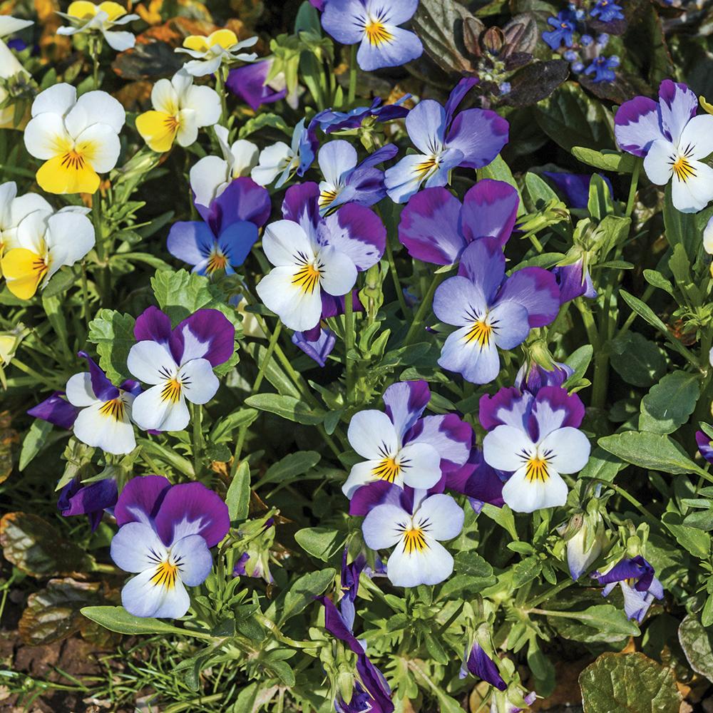 Quelles sont les fleurs comestibles dans votre jardin?