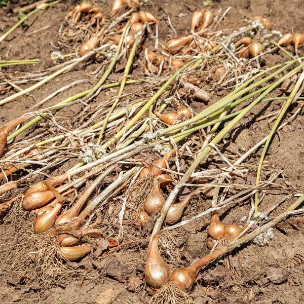 Tout savoir pour étirer la saison des récoltes