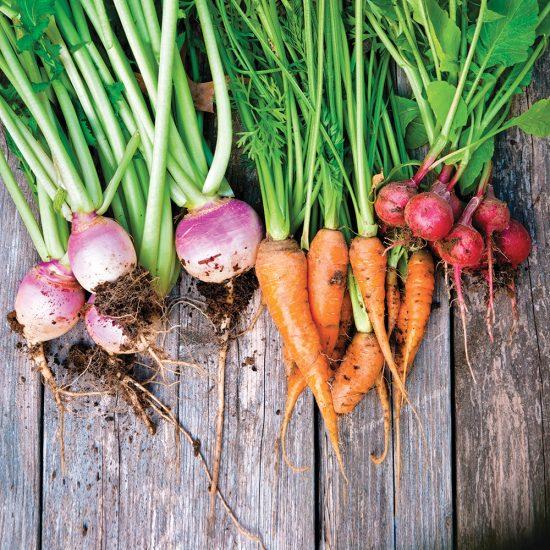 Comment amener à maturité les légumes qui aiment le froid