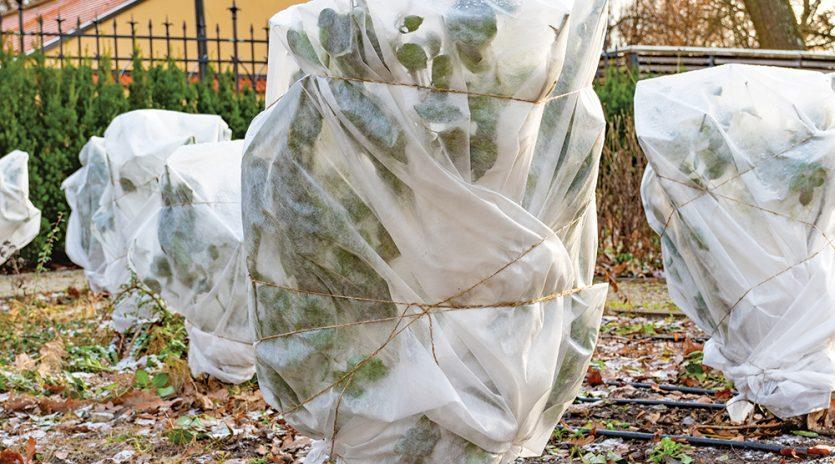 Protéger son jardin pour l'hiver