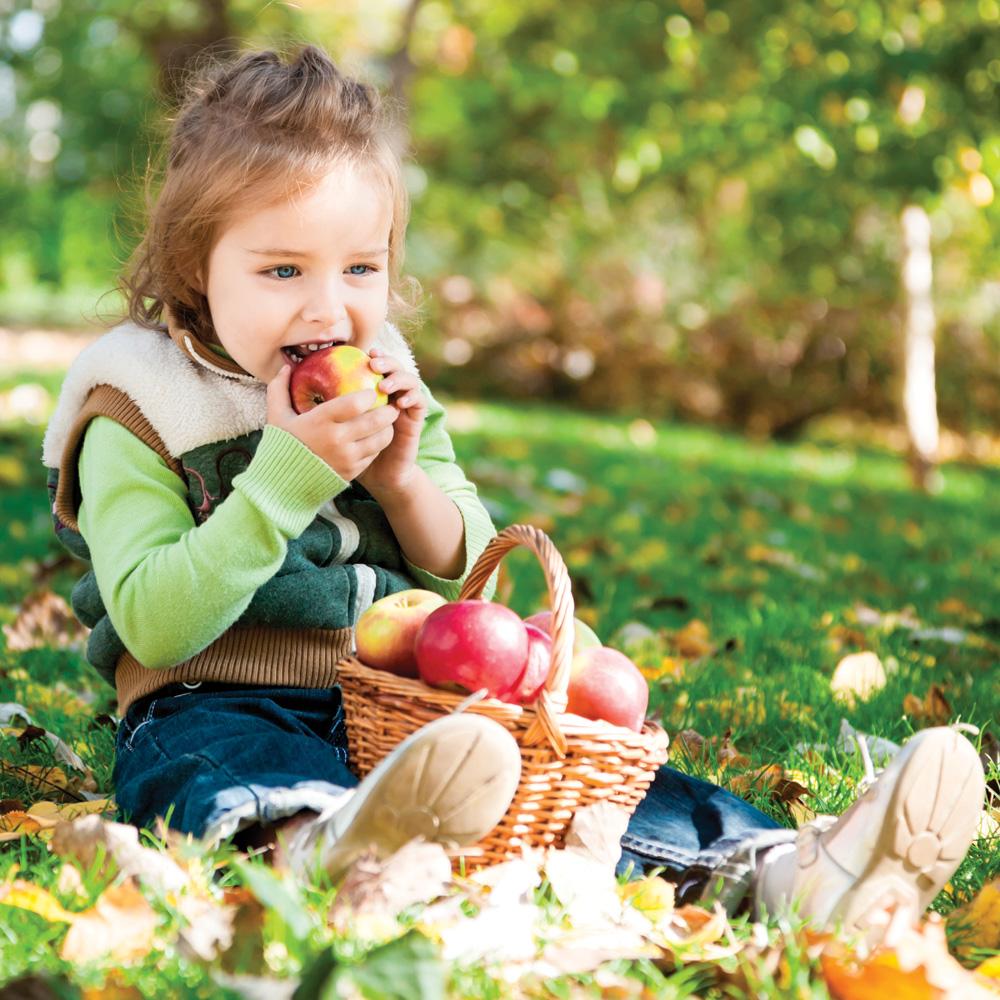 Autocueillette de pommes : top 5 des meilleurs sites au Québec