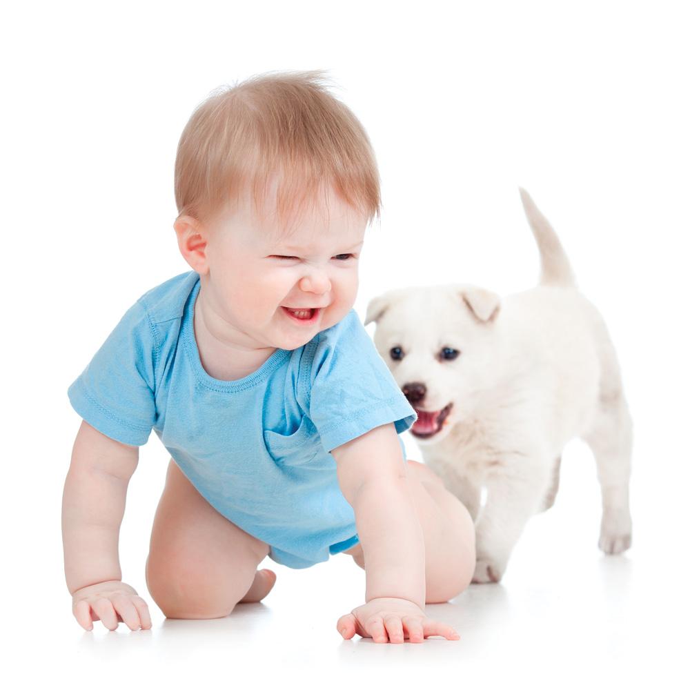 Préparer votre animal à l'arrivée de bébé