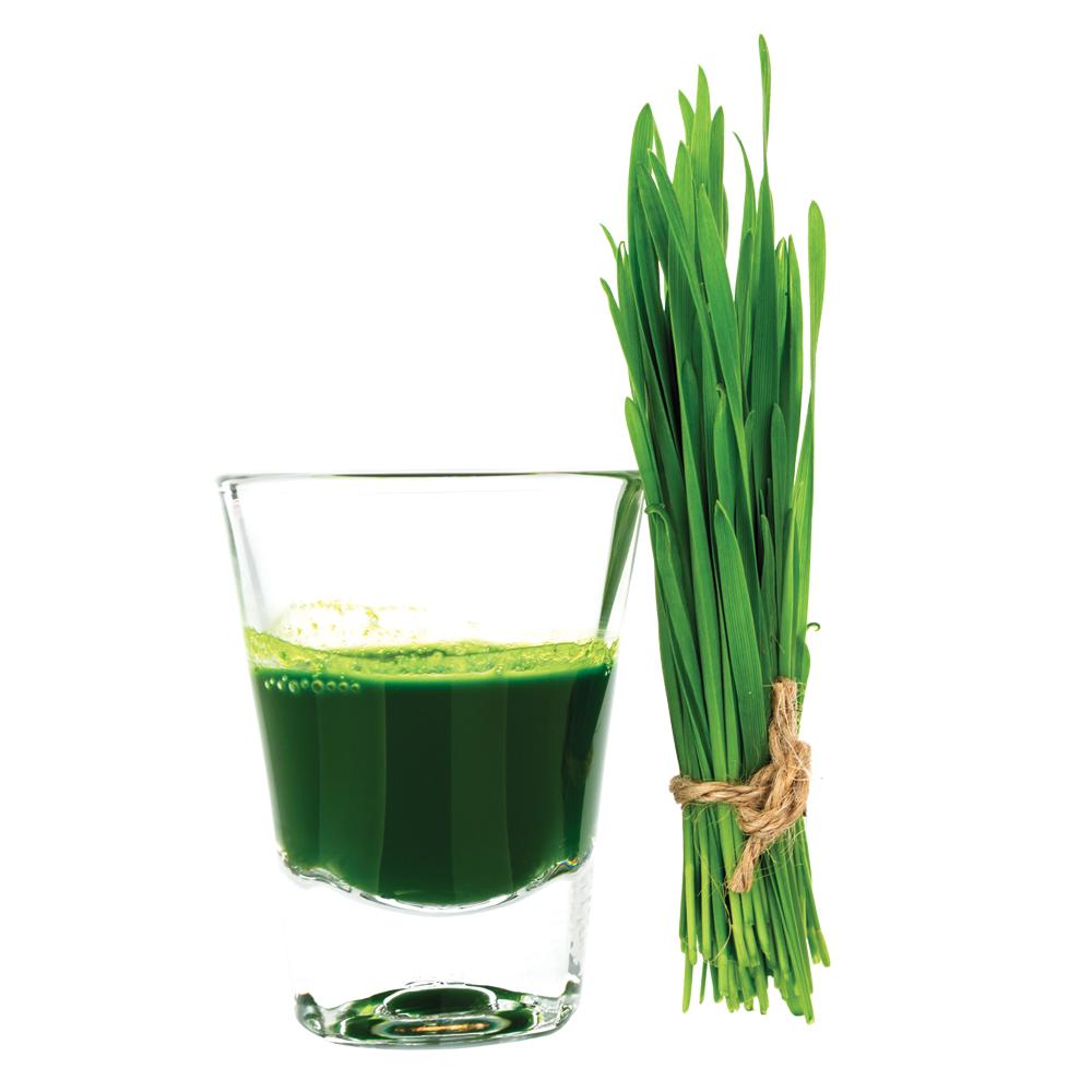 Qu'est-ce que la chlorophylle?